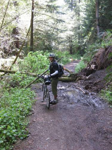 Lower section of Purisima Creek Trail