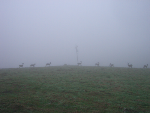 Deer peaking in the fog