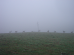Deer in the fog  » Click to zoom ->