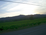 Early morning near Healdsburg  » Click to zoom ->